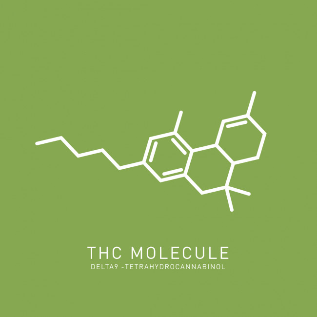 Infographic illustrating the THC molecule